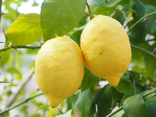 Crema di limoncello: ricetta facile e veloce
